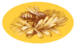 Apiculture Chambron