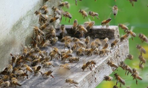 abeilles vol